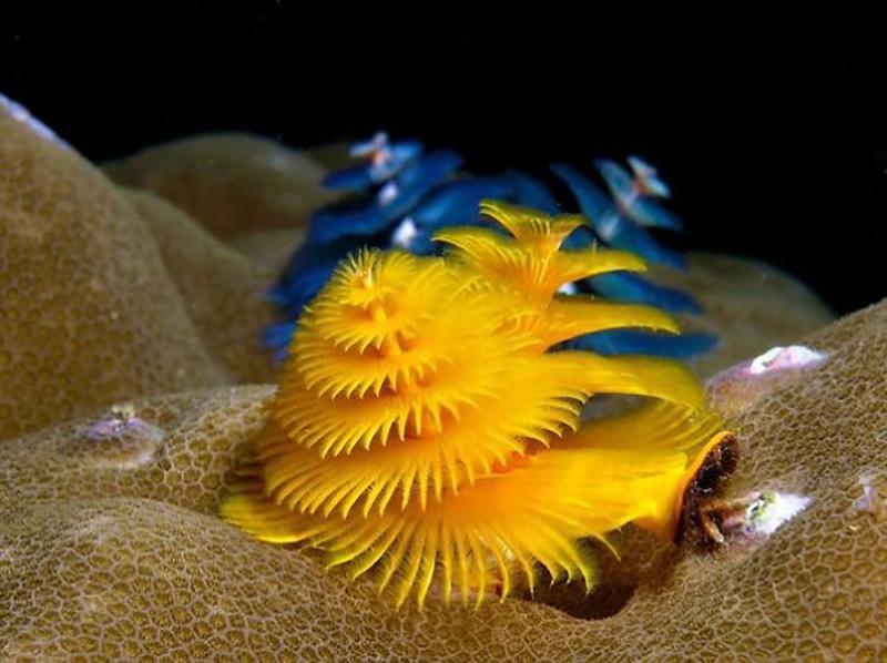 MÁSODIK REND: Soksörtéjűek (Polychaeta)