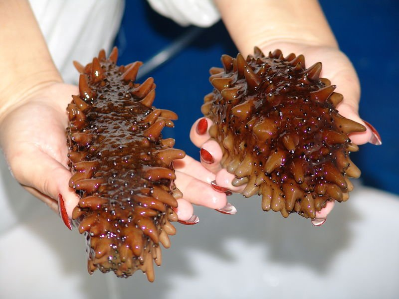 férgek tinktúrája a rókagombák receptjeiből)