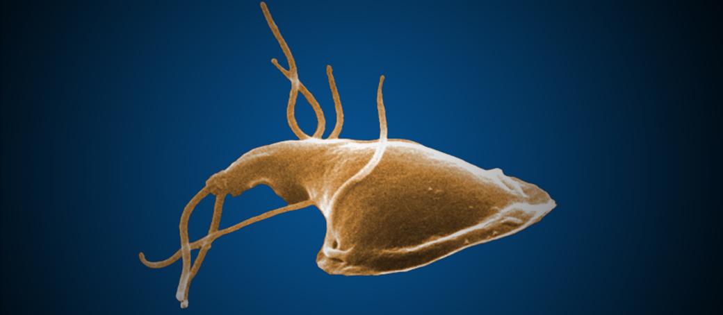 giardia parasite medicine