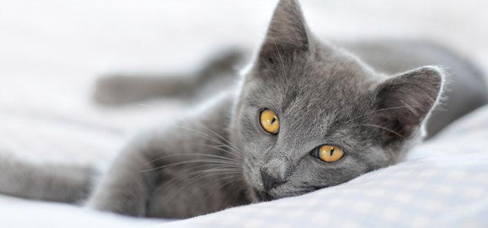 giardien katze behandlung)