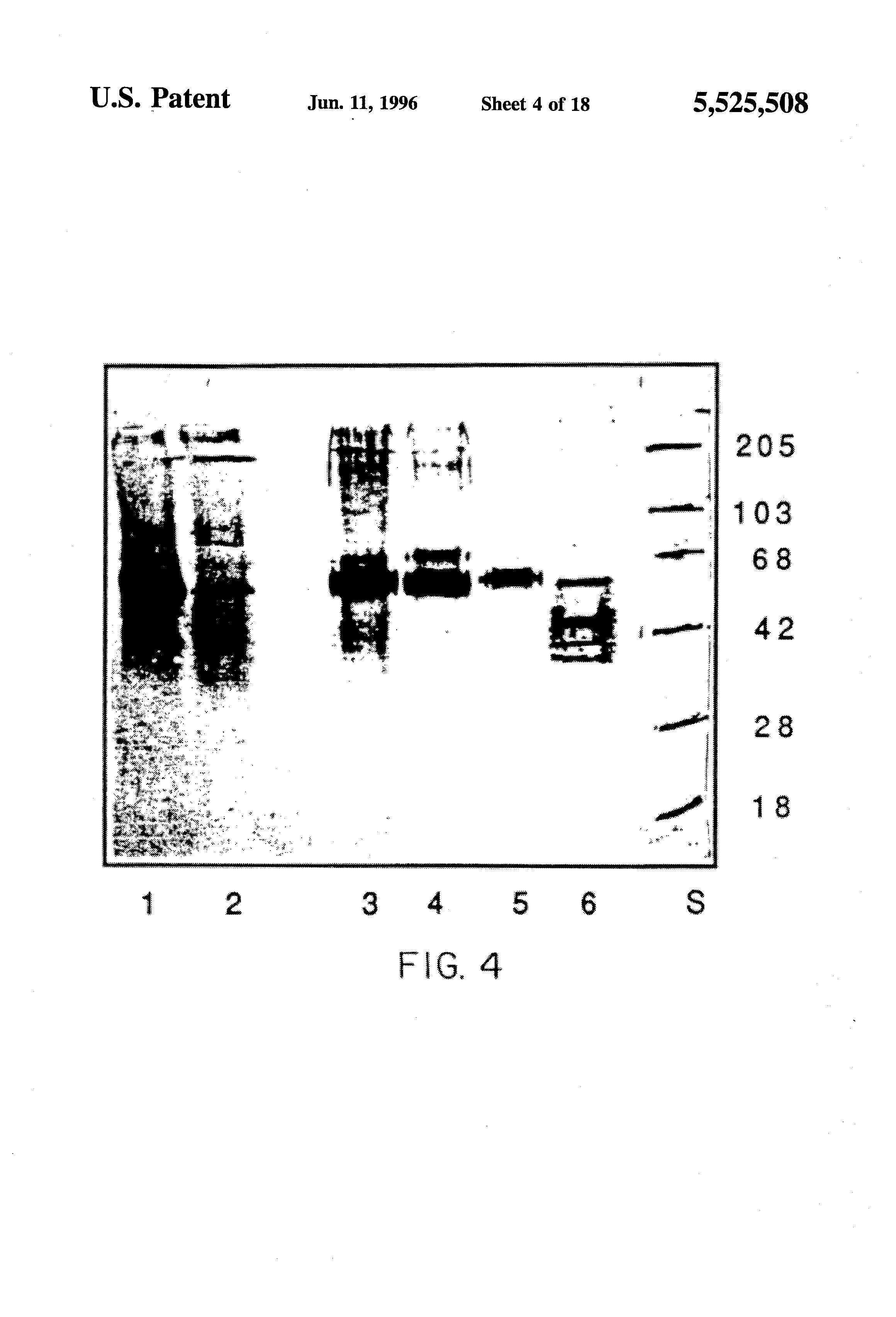 helix enterobiosis)
