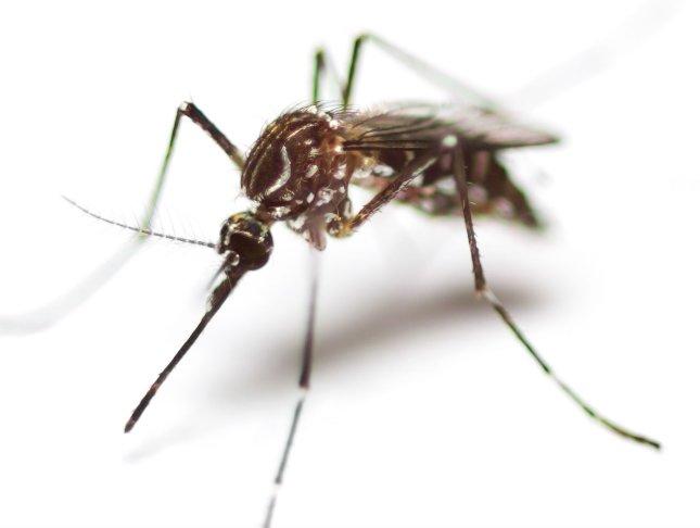 férfi parazita hegyi készítmények pinwormshez