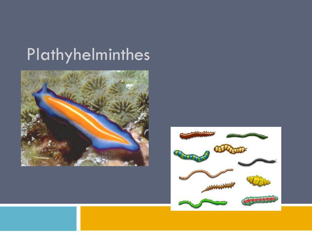 platyhelminthes dan nemathelminthes ppt