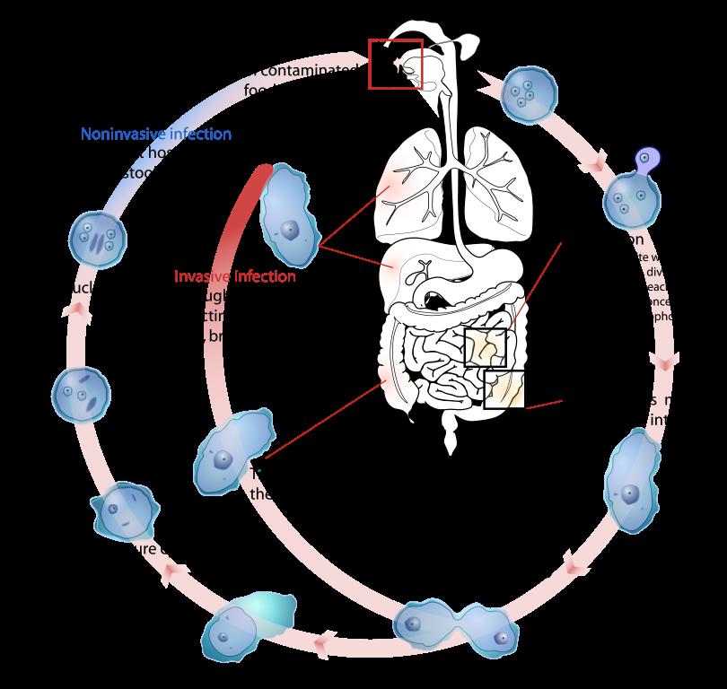protozoai paraziták