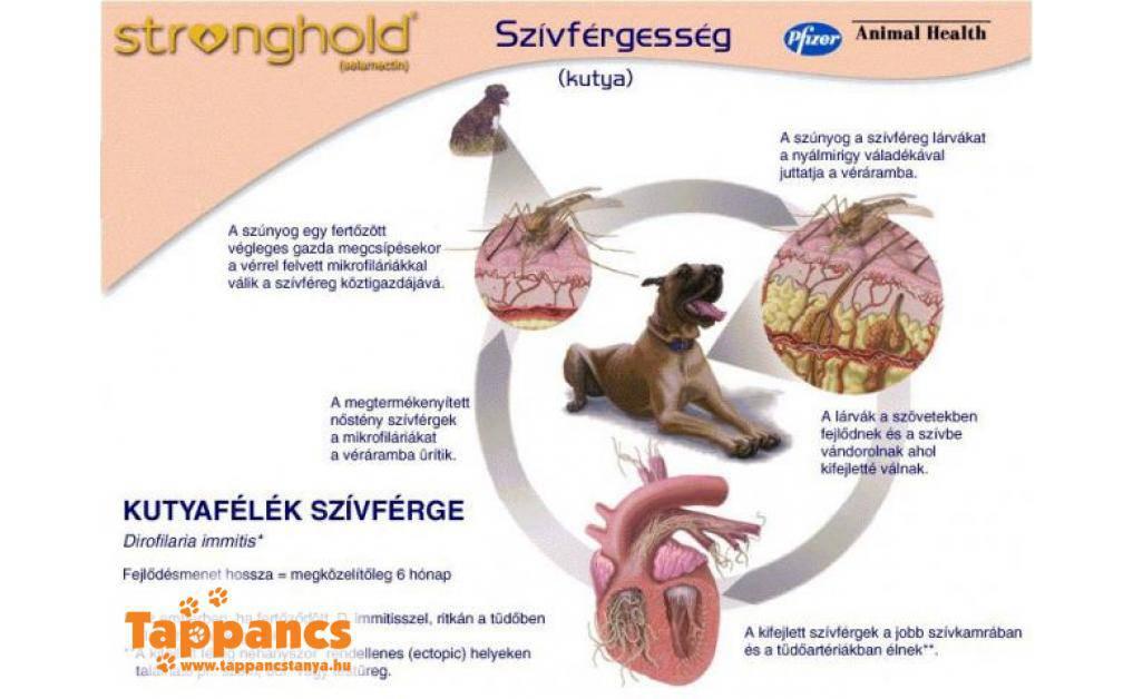 Gyógyítható-e a szívférgesség?   Állatorvosi Rendelő, állatorvos Felsőzsolca, Miskolc