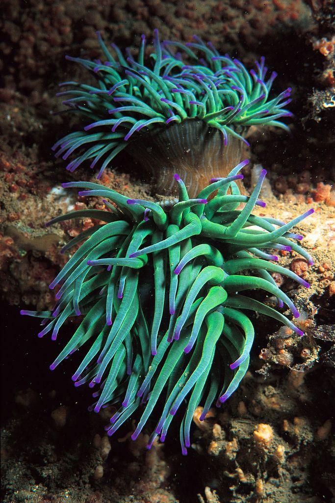 tengeri aschelminthes körféreg